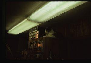 Frank the cat - CMHOF